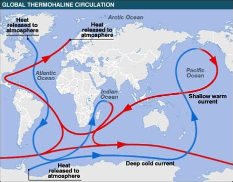 the atlantic conveyor belt (thermohaline circulation
