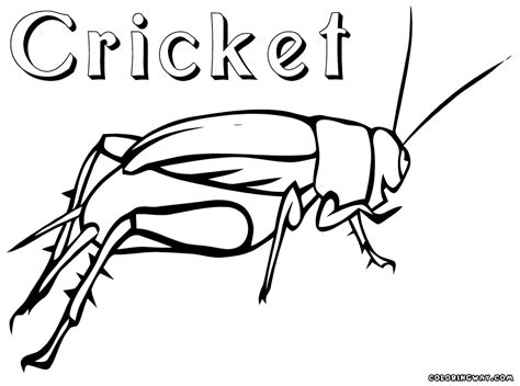 Cricket Colouring Pages Cricket Coloring Pages Coloring Pages To Download And Print by Cricket Colouring Pages