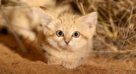 Cat Cat sand cat kittens filmed in the for time