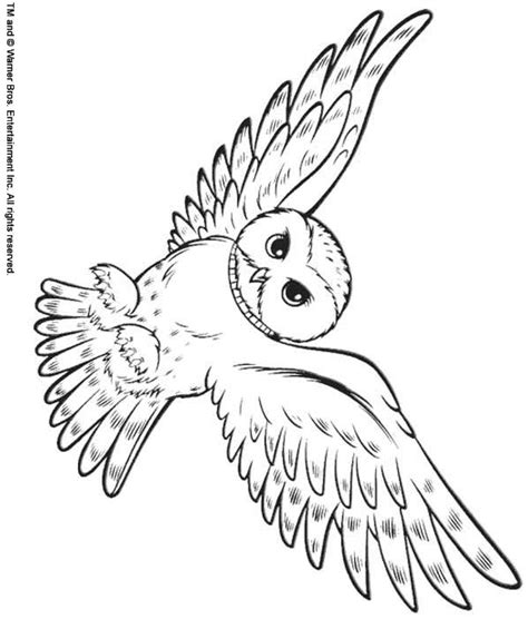 harry potter owl coloring pages back print this snowy owl color page animal coloring