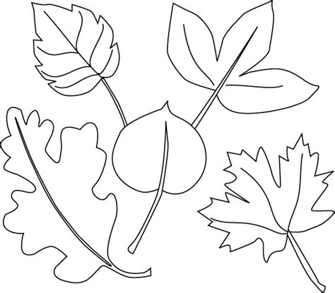 Different Coloring Pages leaves coloring