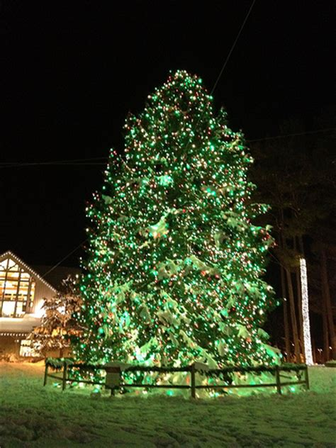 national christmas tree lighting tonight popville