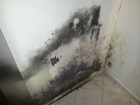risanamento in bioedilizia di umidit 224 di risalita dei muri