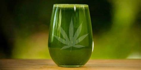 Kombucha Detox Thc by Cannabis Juice What You Need To And How To Make It