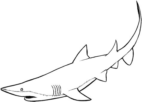 sand shark coloring page free shark coloring pages