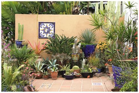 Good Potted Plant Ideas All Home Decorations Potted Trees For Patio