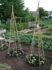 bamboo tripod trellis lillbutton s farm bean teepees