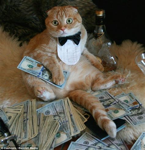 Rich Cat Meme - world s wealthiest cats pose on site featuring top one
