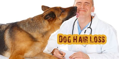 puppy hair loss best breeds for page 13 of 14 dogs addict