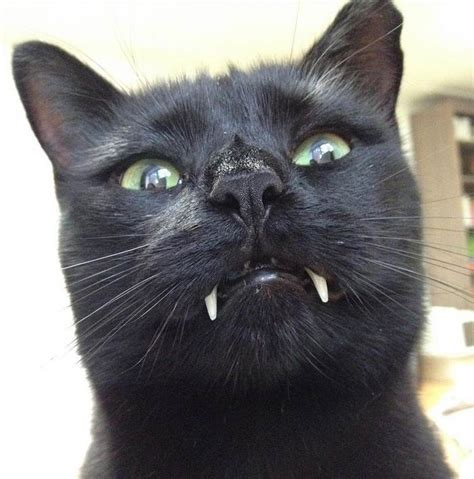 Woman Gets Surprised When Her Rescue Cat Turned Out To Be Black Cat