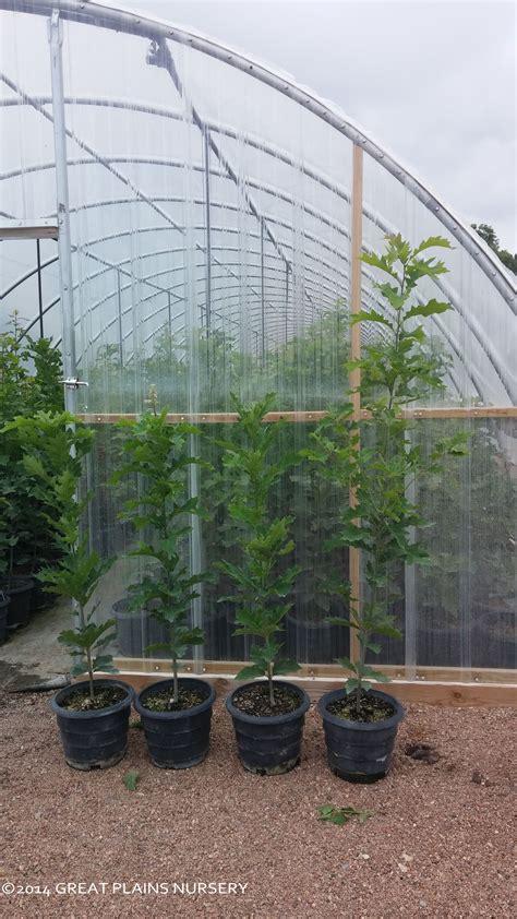 Mcallen Craigslist Farm And Garden by 68 Craigslist Mcallen Tx Farm And Garden Large Size