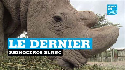 Le dernier rhinocéros blanc - YouTube F24