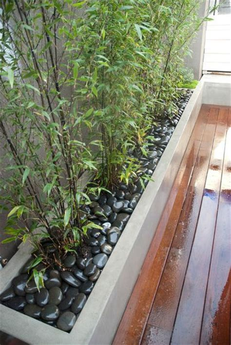 bamboo bamboo planter and planter boxes on pinterest