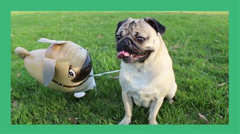 the pug doug the pug and his imaginary friend