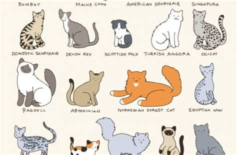 types of cat coloring 28 images goathouse refuge cat
