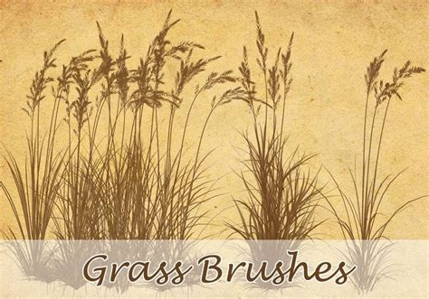grass pattern brush photoshop grass brushes free photoshop brushes at brusheezy