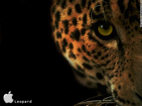 wallpaper mac leopard desktop wallpaper for mac os x leopard desktop wallpaper