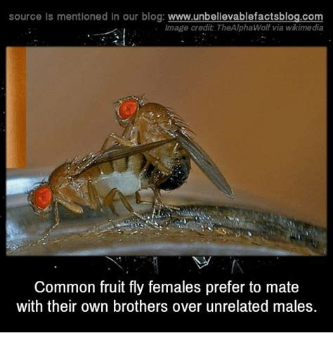 Fly Meme - 25 best memes about fruit fly fruit fly memes