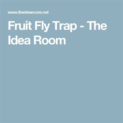 fruit flies in my room 1000 ideas about fruit flies on ants in house get rid of ants and spider