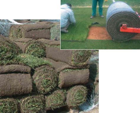 tappeto erba vera erba a rotoli manutenzione accogliente casa di cagna