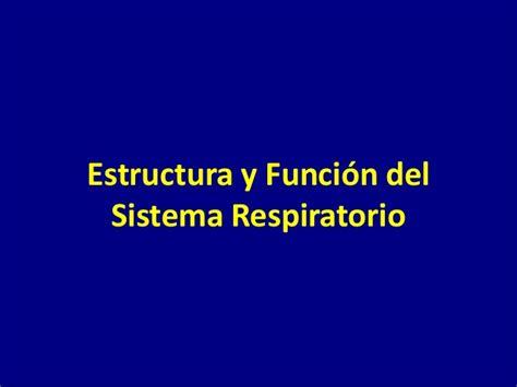 estructura y funcin del 8491130810 estructura y funci 243 n del sistema respiratorio