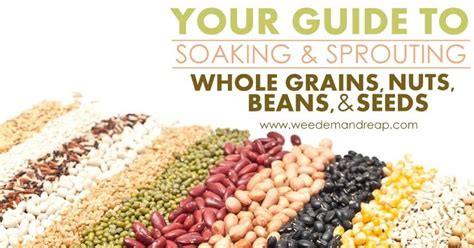 whole grains and beans your guide to soaking sprouting whole grains beans
