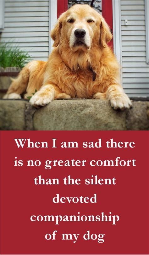 There Is No Comfort In The by 27 Beautiful Quotes Some Touching Some Poignant