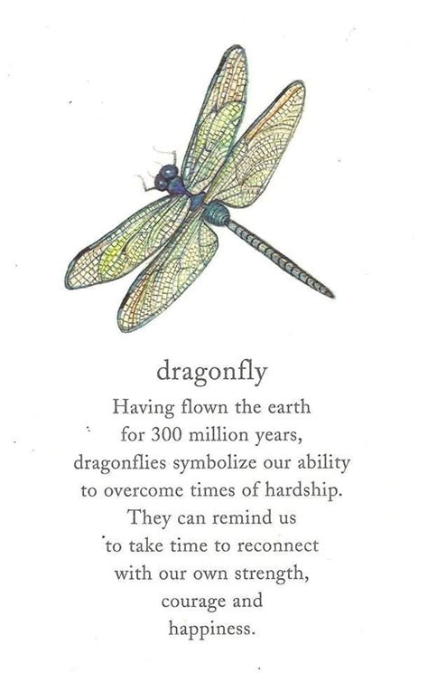 dragonfly tattoo meaning 25 best ideas about dragonfly meaning on