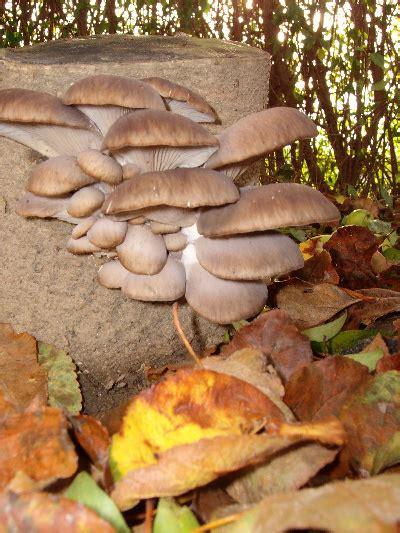 Pilze Im Boden Garten by Pilze Im Garten Z 252 Chten