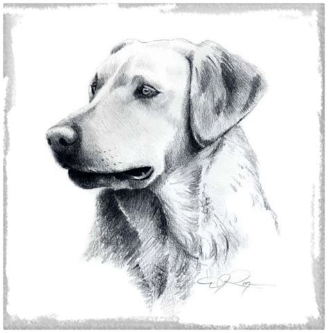 imagenes a lapiz para dibujar de animales imagenes perros para dibujar archivos imagenes de cachorros