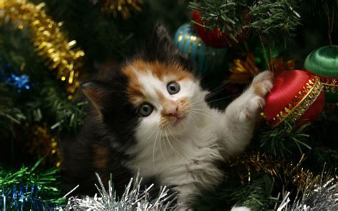 kitten hiding in the christmas tree wallpaper