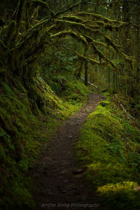 Of Cottage Grove by Magical Trails Wind Through The Temperate Rainforests East