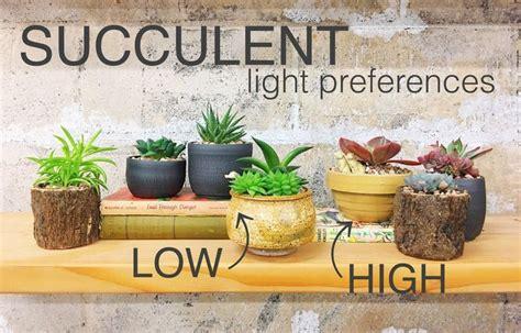 low light succulents houseplants 518 best succulents cacti info care images on pinterest