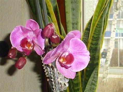 orchideen im schlafzimmer ungesund was bl 252 ht bei euch gerade auf dem balkon im garten co