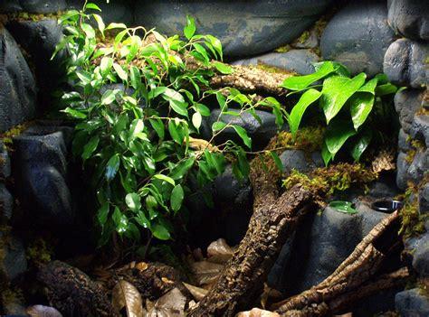 build  crested gecko vivarium