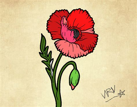 fiore di papavero disegno un fiore di papavero colorato da utente non
