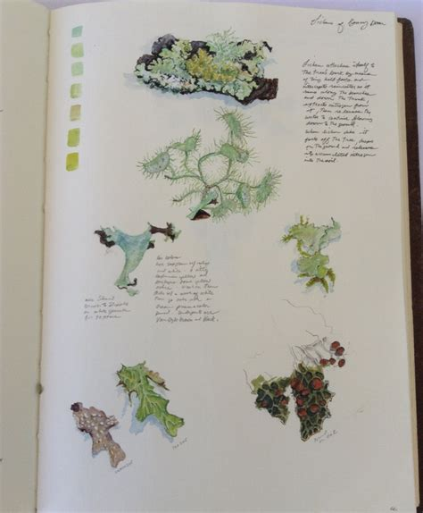 sketchbook journal ideas page from my sketchbook journal on lichens from bonny doon