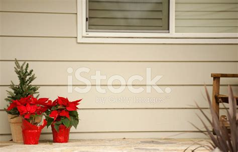 poinsettia on porch poinsettias on the front porch stock photos freeimages