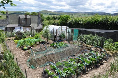 Small Kitchen Ideas Uk selecting crops for survival gardens the prepper journal
