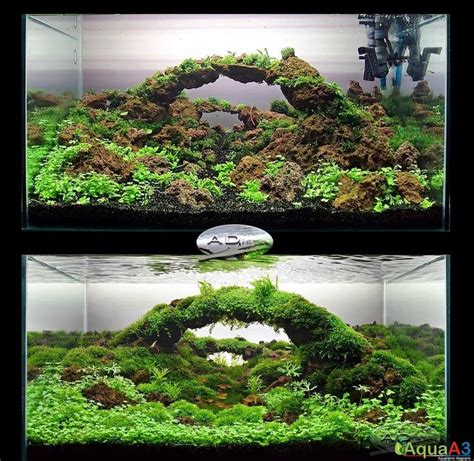 design filter aquascape 1000 images about aquascaping on pinterest a tank