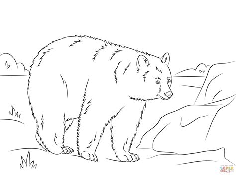 walking american black bear coloring page free printable