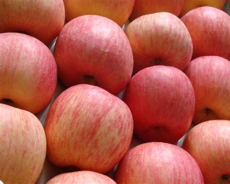 Apel Fuji manfaat buah apel ineraissa