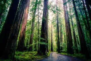 New Zealand Treehouse - can cloning giant redwoods save the planet smart news smithsonian
