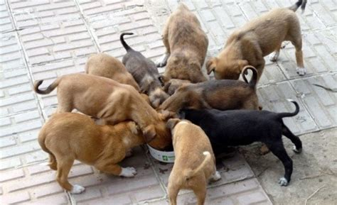 how many times a day should a puppy how much should i feed my care 4 your pets