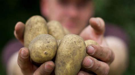 ab wann erste anzeichen für schwangerschaft erste anzeichen wann ist die kartoffel reif erste