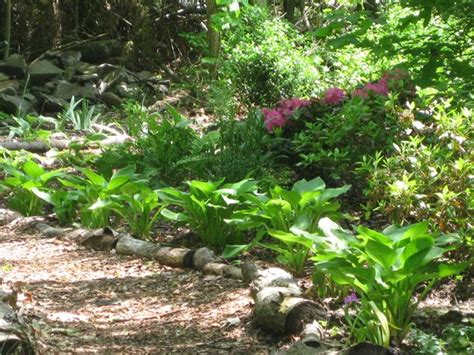 creating a shade garden gallery garden design