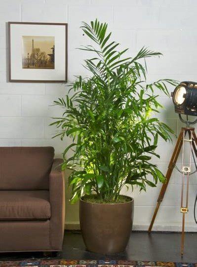 inhouse plants plants to improve indoor air quality bob vila s blogs