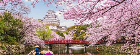 japans cherry blossom