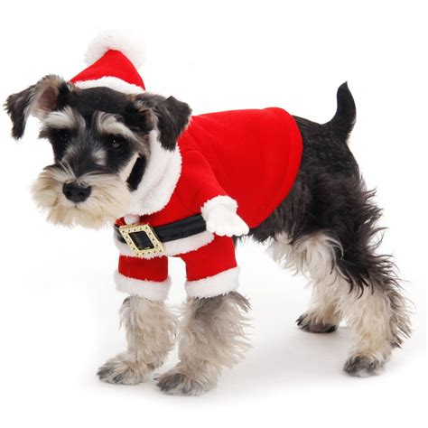 dog christmas jumpers housemydog blog