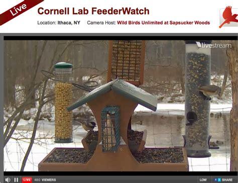 cornell lab of ornithology stephi gardens